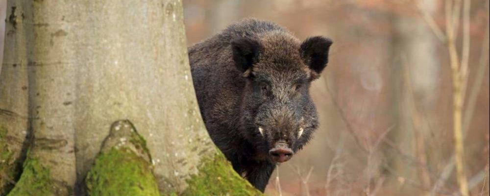 Danni Provocati da Fauna Selvatica