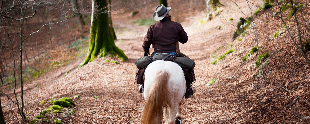 Emanato il Regolamento Provvisorio e Sperimentale per le Attività di Equitazione